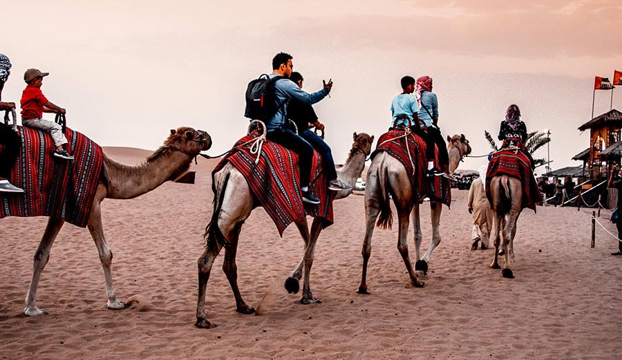 evening-camel-safari